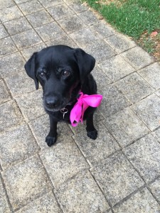 Chelsea with pink bow