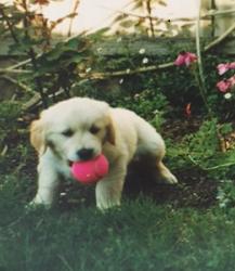 Maxy puppy