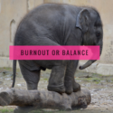 Burnout or Balanced