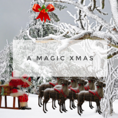 See the magic this Xmas.